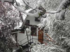 3 - Fachada Liquidámbar invierno -- (FILEminimizer)